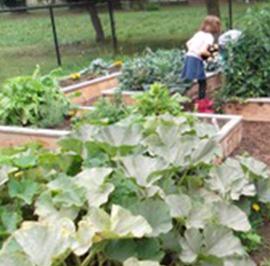 Locally Centered Ministries: Christ Church, Blaine's Children's Giving Garden